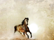 Wild stallion Royalty Free Stock Image