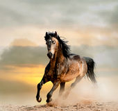Wild stallion in dust Stock Photos