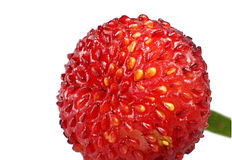 Wild stawberry macro Stock Images