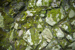 Wild stone wall with green moss Stock Photography