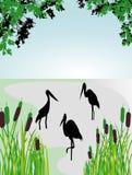 wild stork Royaltyfri Fotografi