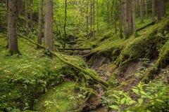 wild ström för bakgrundsskogberg Arkivbild