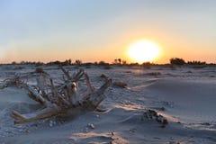 Wild strand Royaltyfri Bild