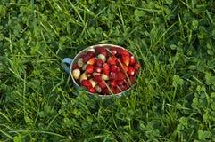 Wild strawberries Stock Photos