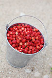 Wild strawberries. Pail full of wild strawberries Stock Photos