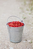 Wild strawberries. Pail full of wild strawberries Royalty Free Stock Photography