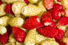 Wild strawberries background Stock Images