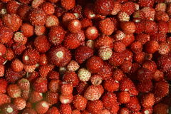 Wild strawberries  background Stock Photography