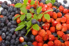 Wild strawberries and blueberries Royalty Free Stock Photography