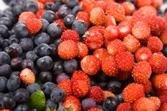 Wild strawberries and blueberries Stock Photography