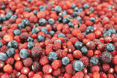 Wild strawberries and blueberries, background Royalty Free Stock Photography