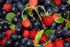 Wild strawberries and blueberry fruits Stock Photo