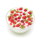 Wild strawberries in a bowl with milk Stock Image