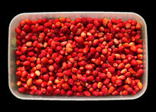 Wild strawberries in the box Stock Image