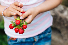 Wild strawberries in child hands Stock Photos