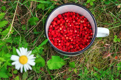Wild strawberries in a cup and flower. Royalty Free Stock Image