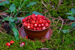 Wild strawberries  in forest Stock Photography