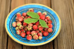 Wild strawberries Fragaria viridis in blue plate with green stra Stock Photo