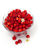 Wild strawberries in a glass bowl Royalty Free Stock Photo