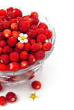 Wild strawberries in a glass bowl Stock Photos