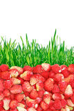 Wild strawberries and grass isolated on white background. Stock Photography