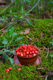 Wild strawberries on green moss Stock Image