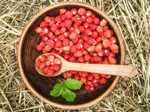 Wild strawberries on a heymow. Wild strawberries in an earthenware basin with a wooden spoon on a heymow Royalty Free Stock Image