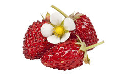 Wild strawberries isolated Royalty Free Stock Photo