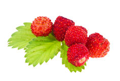 Wild strawberries. And leaf isolated on white Stock Photo
