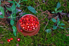 Wild strawberries on moss Royalty Free Stock Images
