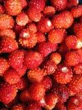 Wild strawberries pattern Royalty Free Stock Image