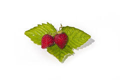 Wild strawberries plant Royalty Free Stock Photo
