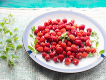 Wild strawberries on a plate. Angle view. Wild strawberries on a plate on napkin with green sprig Royalty Free Stock Photo