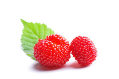 Wild strawberries red Royalty Free Stock Images