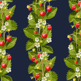Wild strawberries seamless background Royalty Free Stock Photography
