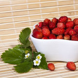 Wild strawberries in a small bowl Stock Images