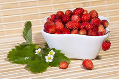 Wild strawberries in a small bowl Stock Photography