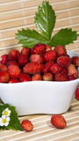 Wild strawberries in a small bowl Royalty Free Stock Images