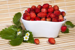 Wild strawberries in a small bowl Royalty Free Stock Photo