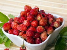 Wild strawberries in a small bowl Royalty Free Stock Image