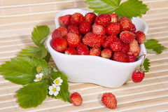 Wild strawberries in a small bowl Stock Photos