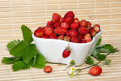 Wild strawberries in a small bowl Royalty Free Stock Photos