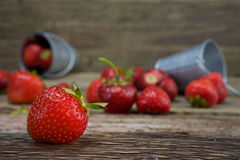 Wild strawberries in a small metal bucket stock photos