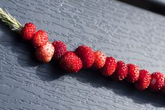 Wild strawberries Royalty Free Stock Photography