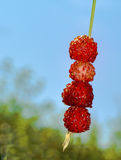 Wild strawberries on a straw Royalty Free Stock Images