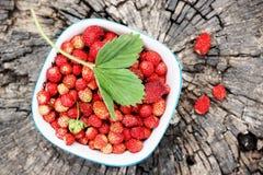 Wild strawberries, top view Stock Photos