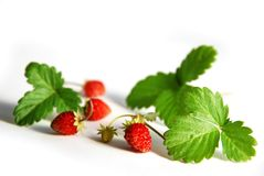 Wild strawberries. On white background stock photos