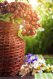 Wild strawberries and wildflowers in the sun Royalty Free Stock Image