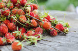 Wild strawberries on a wood log. Stock Image