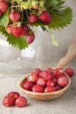Wild strawberries Stock Images